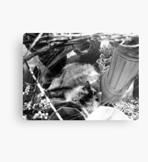 Small Town Pets 2 Metal Print