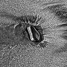 Rock Feathers by Jeffrey  Sinnock