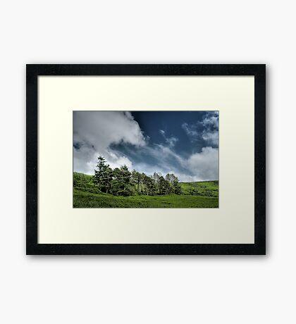 Trees at the Baldwin Reservoir Framed Print