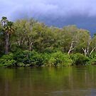 Just about made it in time - Yellow River, Kakadu, Northern Territory by Karen Stackpole