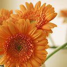Natural Orange by Lennox George