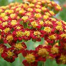 Floral Kisses by ctofine