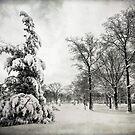Let It Snow (BW) by Yelena Rozov