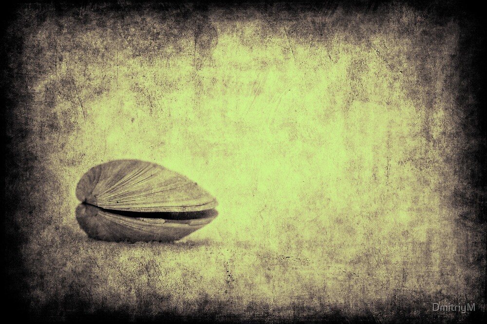 Sea Saw Shell by DmitriyM