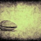 Sea Saw Shell by DmitriyM