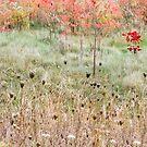 Fall Colours by Ken  Yan