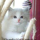 """The smallest feline is a masterpiece."" by Marjorie Wallace"