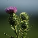 Prickles  by waxyfrog
