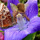 Butterfly 100 by Angelica Frances