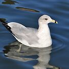 The Lone Gull by Kathy Baccari