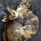 SIBLING CUDDLES by Helen Akerstrom Photography