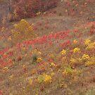 Hillside Colors in Elliott County, Ky by Kent Nickell
