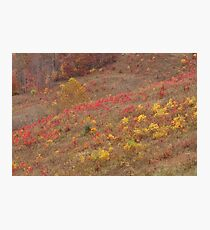 Hillside Colors in Elliott County, Ky Photographic Print