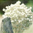 Seeds by Margi