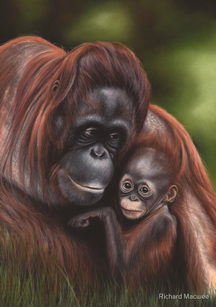 Wildlife artwork of an Orangutan by Richard Macwee