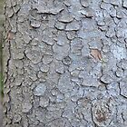 Tree Trunk Nature Pattern by nadinestaaf