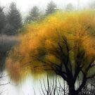 Foggy Morning © by Dawn Becker