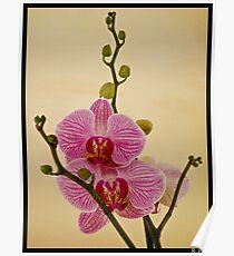 Orchidea. Poster