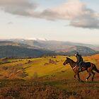 Horseriding in Wales by Stephen Liptrot
