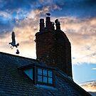 gulls by David Milnes