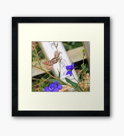 Tasty Nectar  Framed Print