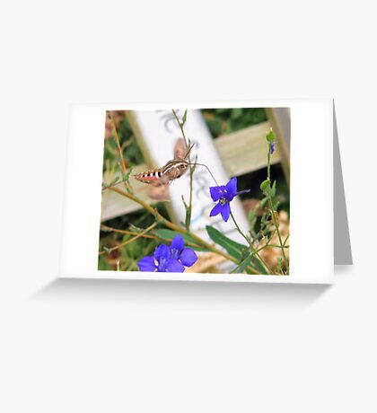 Tasty Nectar  Greeting Card