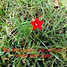 Last little flower by trisha22