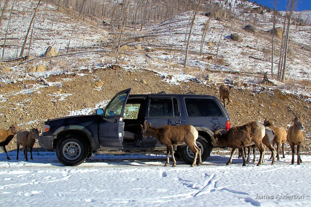 Portable Salt Lick by James Anderson