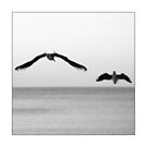 Baltic Waves picture - black and white photograph with white border by Falko Follert