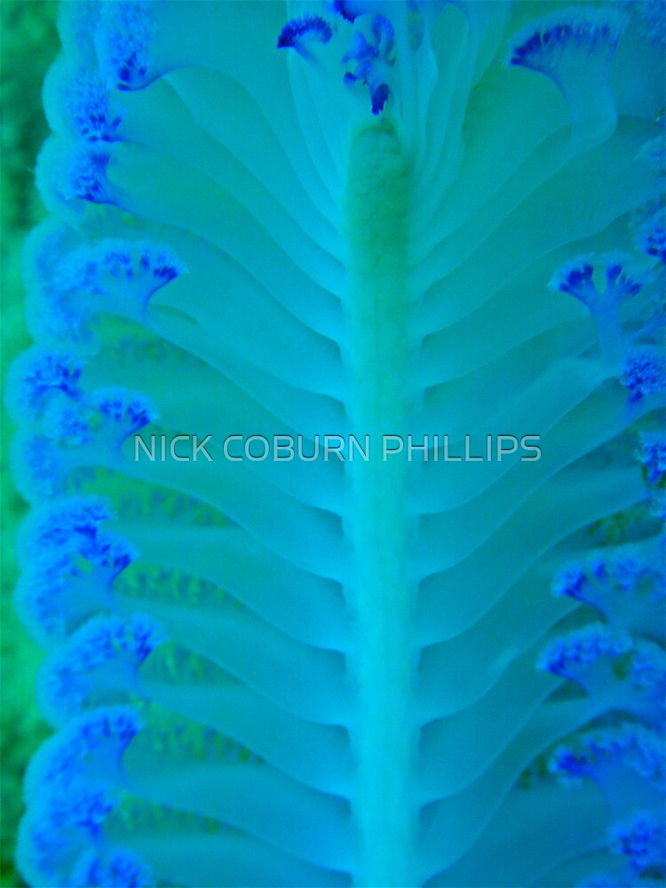 THE WRITINGS OF THE SEA by NICK COBURN PHILLIPS