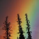 spruce on spectrum by Marty Samis