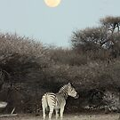 The Moon & The Stripes by Donald  Mavor