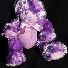 Teddy in Purple by Bev Pascoe