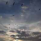 Sunset With Birds - Puesta Del Sol Con Aves  by Bernhard Matejka