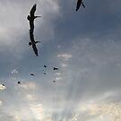 Pelicans in the sunset - Pelícanos en la puesta del Sol by PtoVallartaMex
