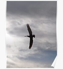 Flying Pelican - Pelícano Volando Poster