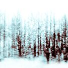 Winter Woodland by Alison McLean