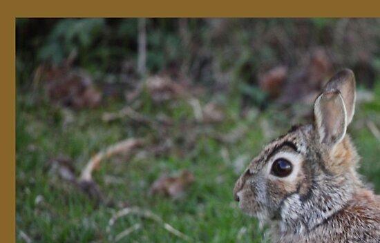 Rabbit by Thomas Murphy