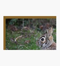 Rabbit Photographic Print