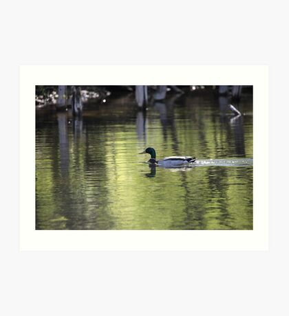 Duck Water Scene Art Print