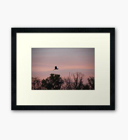Great Blue Heron on Pink Sky Framed Print