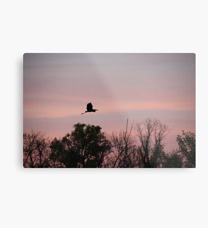 Great Blue Heron on Pink Sky Metal Print