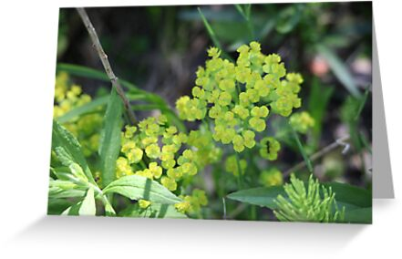 Flowers of Green by Thomas Murphy
