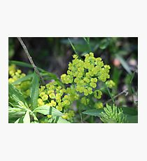 Flowers of Green Photographic Print