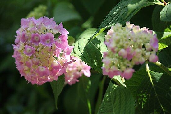 Flower by Thomas Murphy