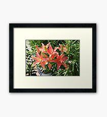 Flower  Framed Print