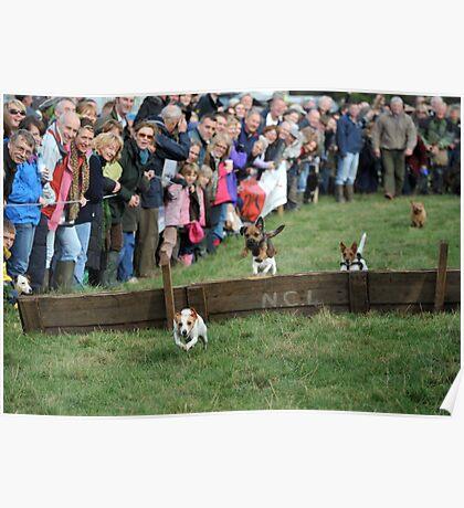 Terrier Racing Poster