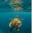 Turtle rising by Kara Murphy