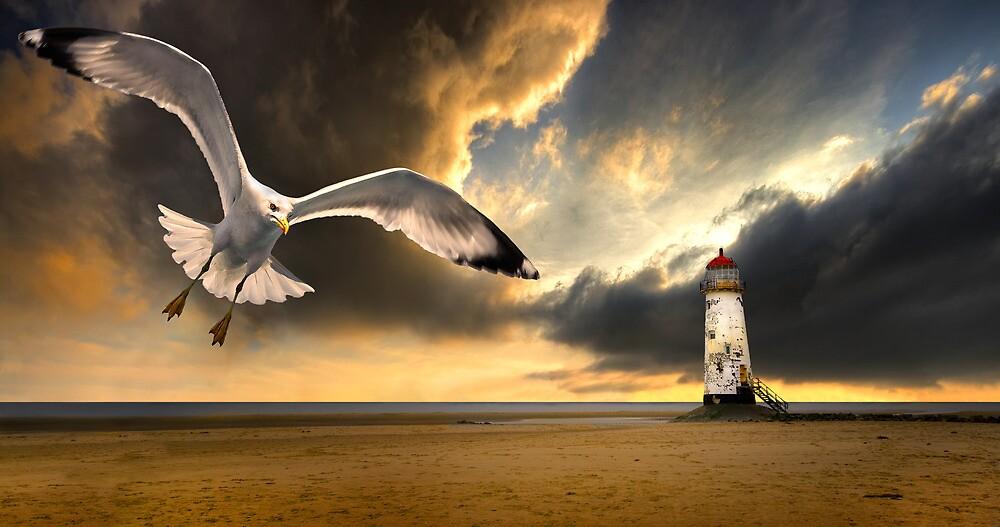 soaring inshore by meirionmatthias
