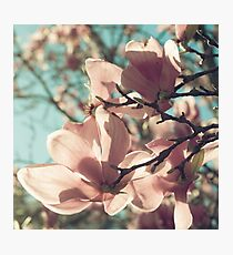 already blooming Photographic Print